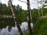Лесное озеро фото