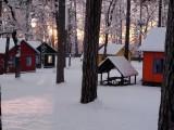 отдых зимой в лесу
