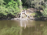 Живописные берега Тетерева